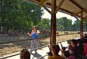 Visite guidée de l'élevage de biches et cerfs